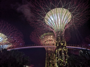 Sky Trees im Garden by the Bay Singapore